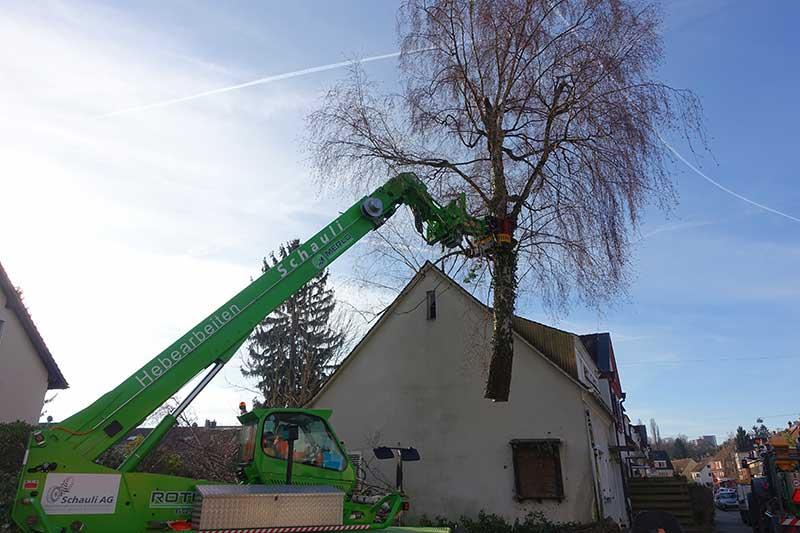 Baumfällen im langen Loh