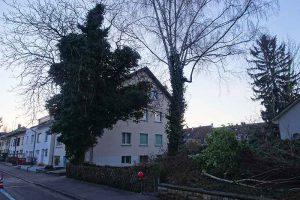 Baumfällen im langen Loh Baumfällaktion